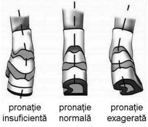 pronatie3