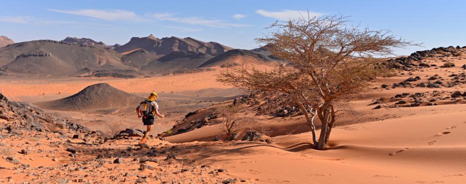 marathon-des-sables-2015